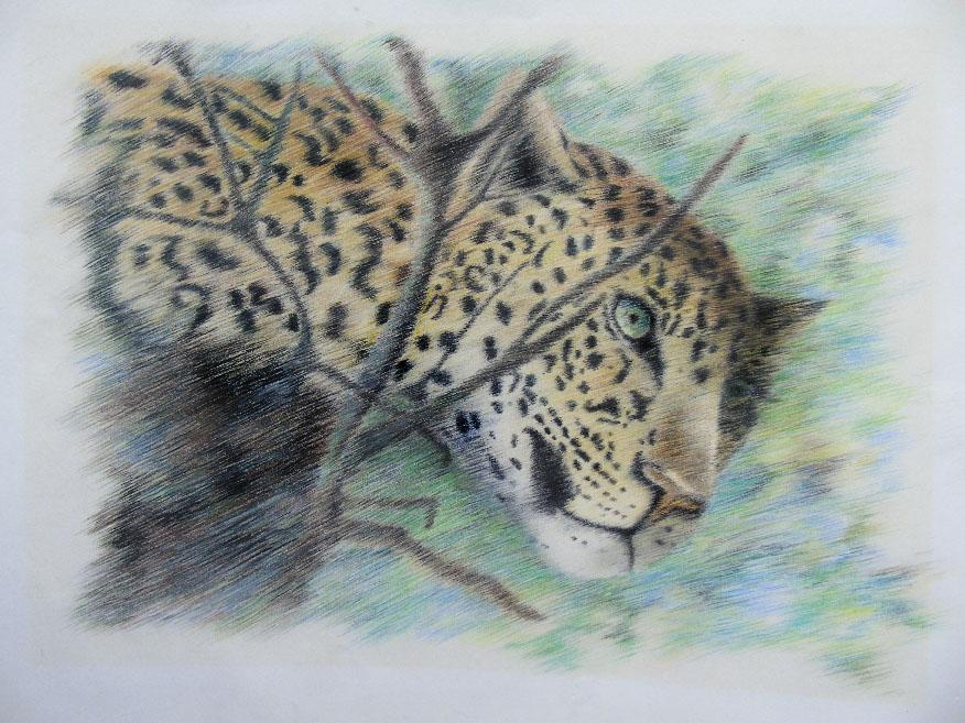 pantera-leontine-gaasenbeek